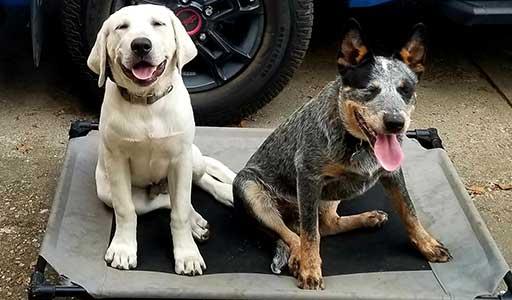 OLK9 Puppy Consultation